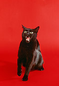 CAT 02 RK0863 04