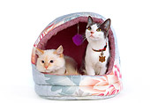 CAT 02 RK0987 01