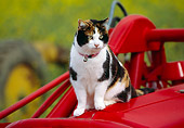 CAT 02 RK1057 10