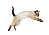 CAT 02 RK1127 07