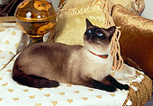 CAT 02 RK1153 02