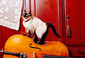 CAT 02 RK1164 10
