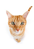 CAT 02 RK1178 01