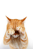 CAT 02 RK1181 01