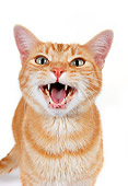 CAT 02 RK1182 01
