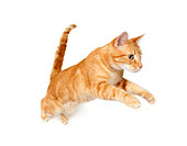 CAT 02 RK1195 01