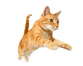 CAT 02 RK1198 01