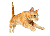 CAT 02 RK1199 01