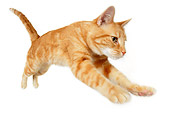 CAT 02 RK1202 01