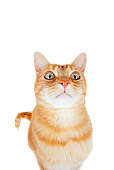 CAT 02 RK1204 01