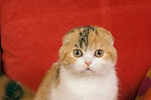 CAT 02 RK1396 01