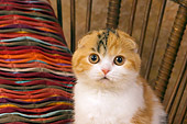 CAT 02 RK1398 01