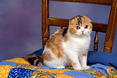 CAT 02 RK1403 01