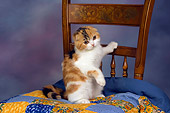 CAT 02 RK1404 01