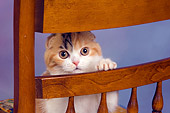 CAT 02 RK1406 01