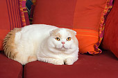 CAT 02 RK1409 01