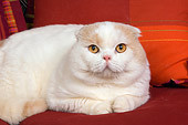 CAT 02 RK1410 01