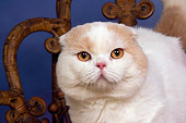 CAT 02 RK1414 01