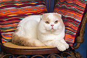 CAT 02 RK1417 01