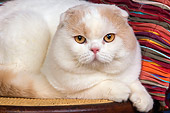 CAT 02 RK1418 01