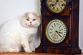 CAT 02 RK1420 01