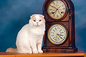 CAT 02 RK1421 01