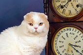 CAT 02 RK1422 01