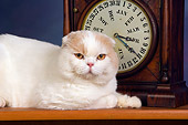 CAT 02 RK1423 01