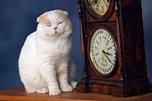 CAT 02 RK1425 01