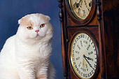 CAT 02 RK1426 01