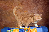 CAT 02 RK1433 01