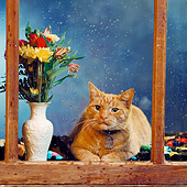 CAT 02 RS0171 06