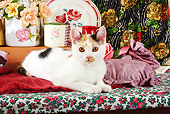 CAT 02 SJ0004 01