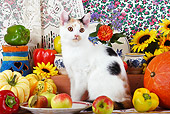 CAT 02 SJ0005 01