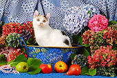 CAT 02 SJ0007 01
