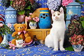 CAT 02 SJ0009 01