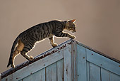 CAT 02 WF0002 01