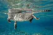 CAT 02 WF0003 01