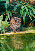 CAT 02 WF0005 01