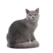 CAT 02 XA0001 01