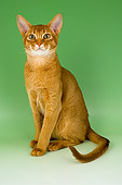 CAT 02 AL0003 01