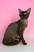 CAT 02 AL0011 01