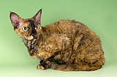 CAT 02 AL0013 01