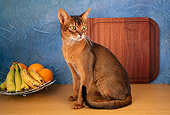 CAT 02 AL0018 01