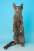 CAT 02 AL0022 01