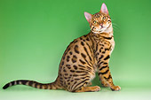 CAT 02 AL0025 01