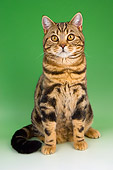 CAT 02 AL0026 01