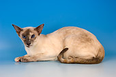 CAT 02 AL0029 01