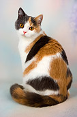 CAT 02 AL0041 01
