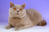 CAT 02 AL0042 01